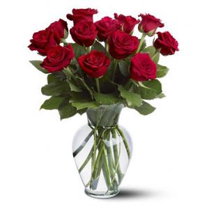 12 Long Stem Red Rose Special buy at Florist